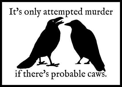 Crow murder