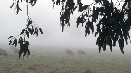 foggy-sheep-web