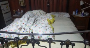 doona-bed